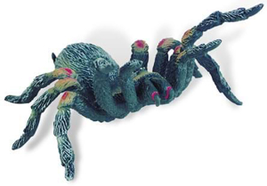 Picture of Tarantula