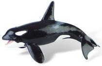 Imaginea Balena Orca