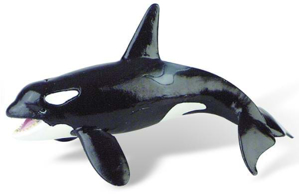 Picture of Balena Orca