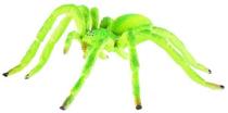 Imaginea Paianjen verde Micrommata