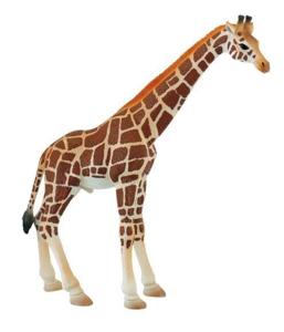 Picture of Girafa mascul