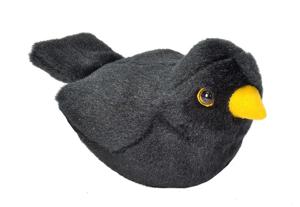 Picture of Pasare cu sunet Mierla - EUROPEAN BLACKBIRD
